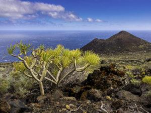 La Palma thumb